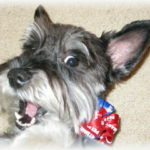 """Roxie says """"thanks"""" for helping animals!"""